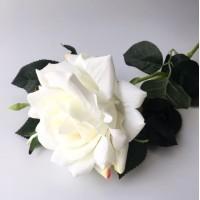 Rosa Blanca XL