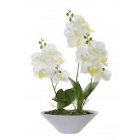 Planta Orquídea XXL