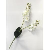 Orquídea Ramo