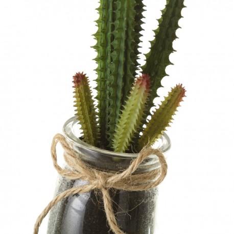 Planta Cactus 1